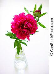 Pink peony in vase