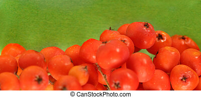 Red ashberry bunch on green