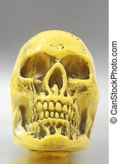 Yellow Skull - An Ancient Yellow Skull on a Colored...