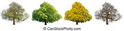 four season isolated tree set