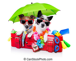 vacances, chiens