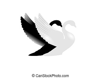 two swans in silhouette - black and white swan concept for...