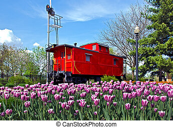 red caboose with tulips - Red caboose with spring tulips