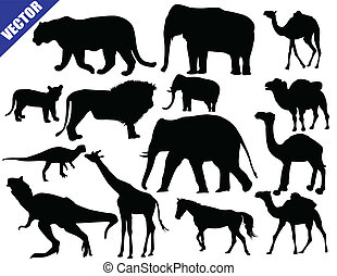 Zoo animals collection on white background, vector...