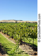 Barossa Valley, Australia - Landscape of Barossa Valley,...
