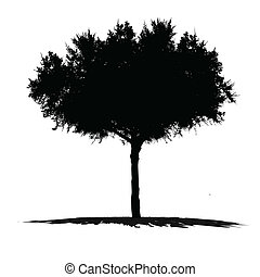 Vector drawing of the tree on white background
