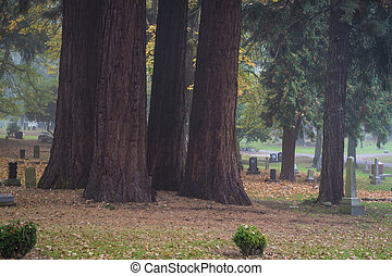 Large tree trunks in an old Old Pioneer Cemetery - Large...