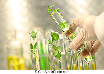Small plants in test tubes - Close-up of small plants in...