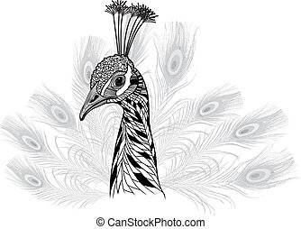 Peacock bird head as symbol for mascot or emblem design,...