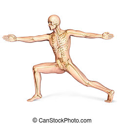 Human male in dynamic posture, with full skeleton...