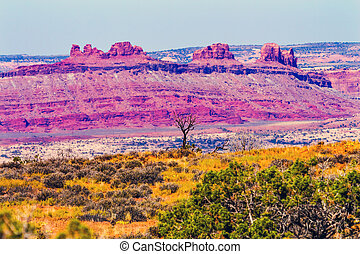 Dead Tree Colorful Yellow Grass Lands Red Moab Fault Windows Section Arches National Park Moab Utah USA Southwest.