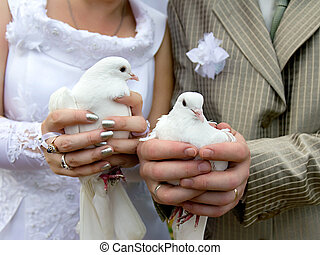 Wedding doves close-up in the hands of the bride and groom