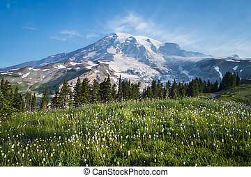 Beautiful wildflowers and Mount Rainier, Washington state