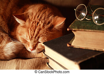 Cat And Books - Ordinary domestic ginger cat asleep near old...