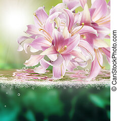 Flower beautiful orchid.Exotic water background