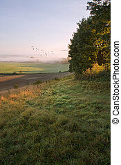 Layers of fog over Autumn agricultural landscape