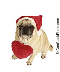 pug santa claus cap - pug with santa claus cap, exempted,...