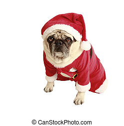 pug christmas costume - pug in santa costume, exempted,...