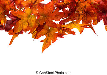 Fall leaf border - Fall leaves on white background, fall...