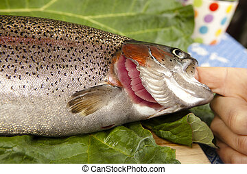 recognize fresh trout to the gills, close up, cut a raw...