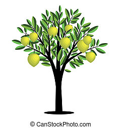 Lemon tree with ripe fruits