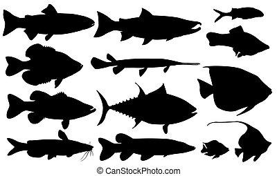 fish set isolated on white