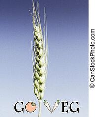Triticum aestivum L., Wheat crop, Go Veg, Concept