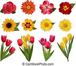 Set of beautiful flowers. Vector illustration