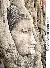 Buddha Head in Tree Roots - Buddha head encased in tree...
