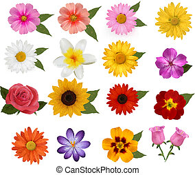 Big set of beautiful colorful flowers. Vector illustration