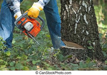 Leñador, cortes, Abajo, árbol, Chainsaw