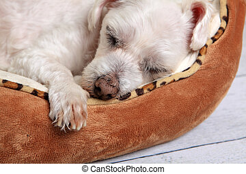 Sleeping dog in pet bed - Closeup of a puppy dog sleeping...