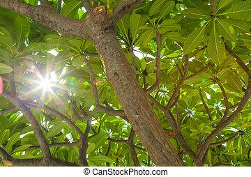 Sunlight through a tree.