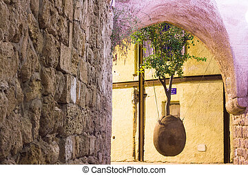 the hanging tree - Old Jaffa the hanging tree