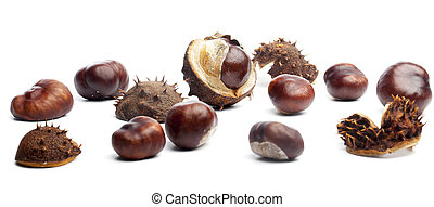 Conkers or horse chestnuts in capsule - Set of conkers or...