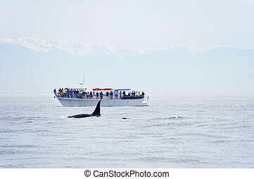British Columbia Whale Watching - Orca Whale watching in...