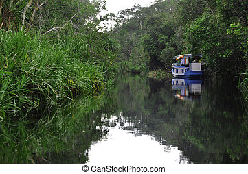 Rain forest Mirrored in Water - Boat and lush green...