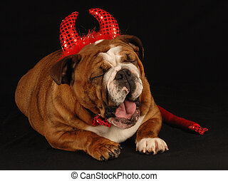 devilish dog - english bulldog dressed up as a devil on a...