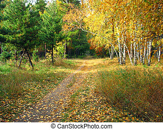 Gold autumn landscape - path in a mixed forest - Colors of...
