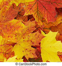 Ground covered with autumn leaves - Ground covered with...