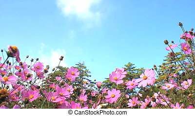 Daisy and blue sky for adv or others purpose use