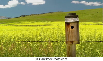 Bird Entering Birdhouse - Bird enters a birdhouse on a fence...