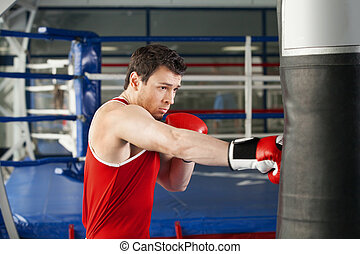 Boxer Young boxer in boxing gloves training at the punching...