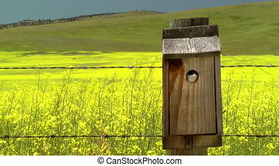 Bird in Birdhouse - Bird perched in a birdhouse with food in...