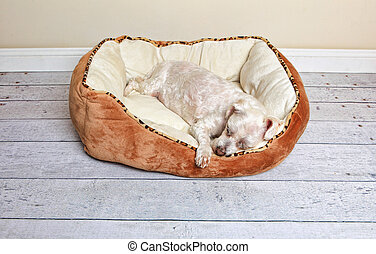 Dog sleeping in a dog bed - Dog sleeping or napping in a...
