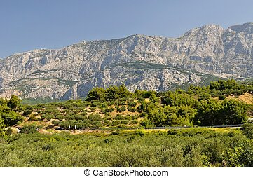 Trees with high mountain Biokovo - Trees with high croatian...