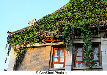 Ivy in the grey building, Peking University, China
