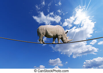 Rhino Walking on Rope - Great white rhino walking on steel...