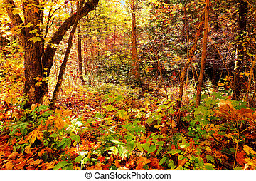 Enchanted forest - Beautiful enchanted forest during fall or...