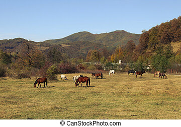 Pastoral - Rural pastoral scene with horses in the autumnal...